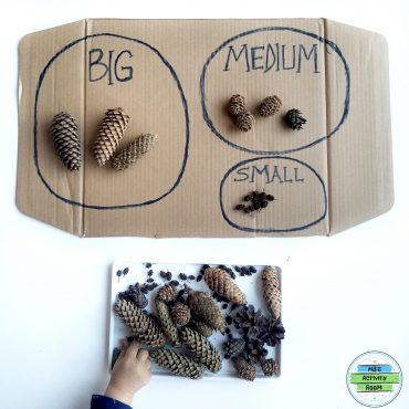 Pine Cone Size Sorting